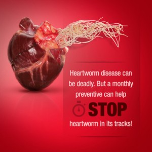 Stop Heartworms